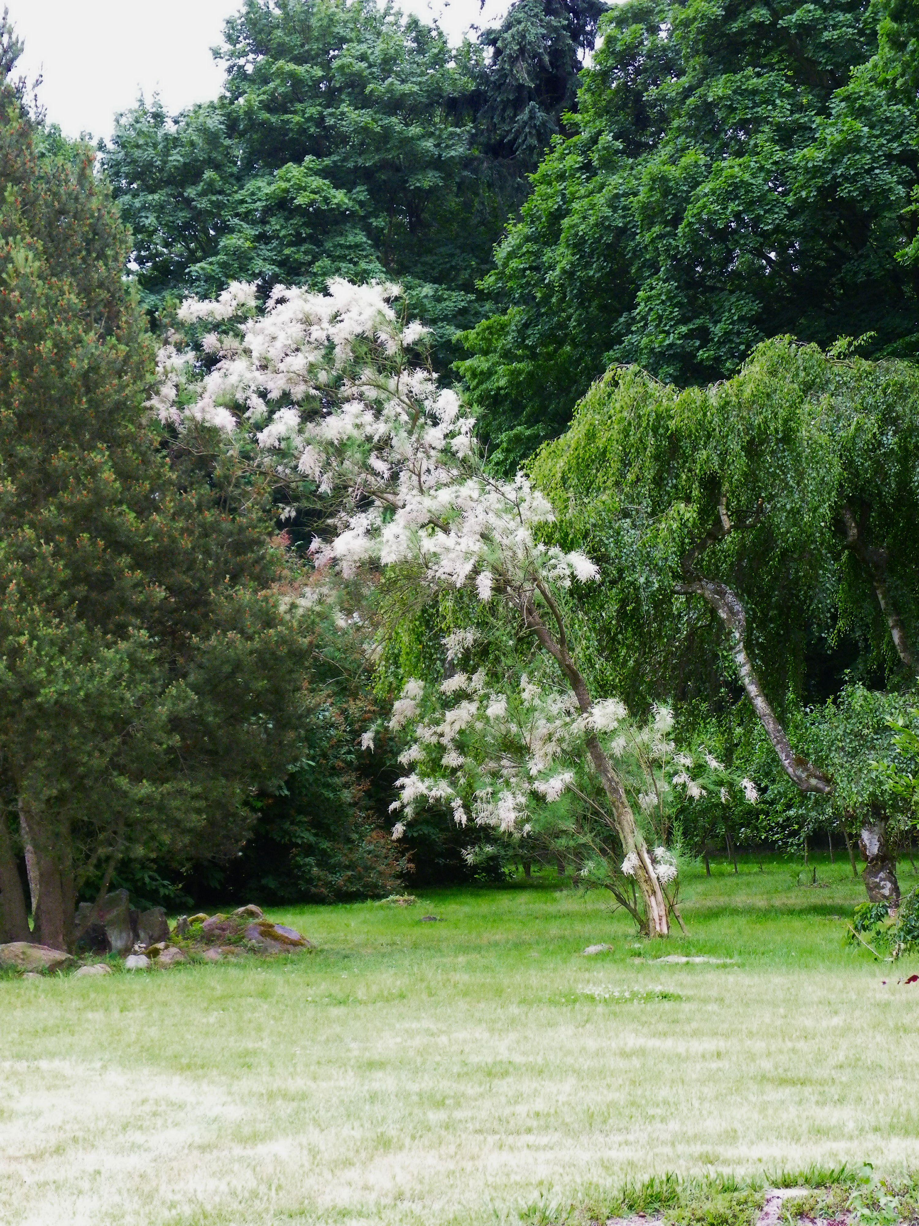 Gołuchów Park - Ogród kwiatowo - ziołowy.