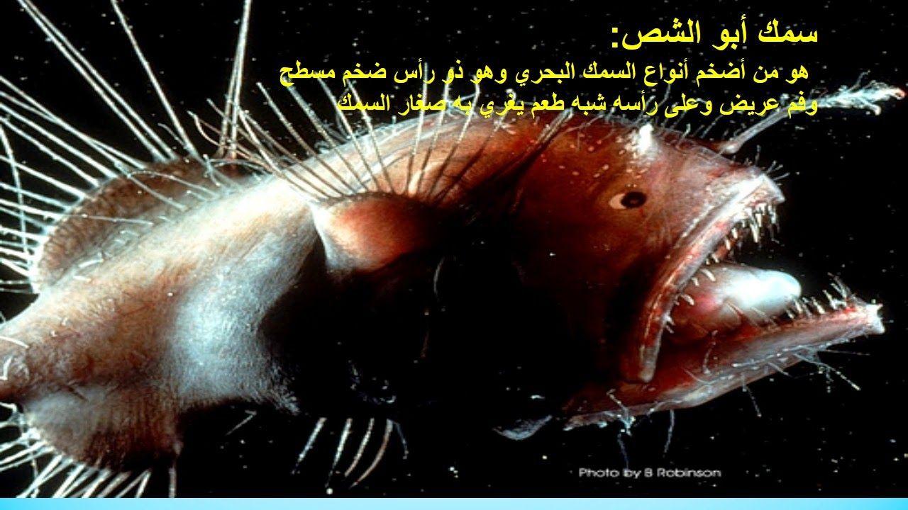 اسماك بحريه غريبه سبحان الله الخلاق العظيم مدونة الود Scary Fish Weird Sea Creatures Dangerous Fish