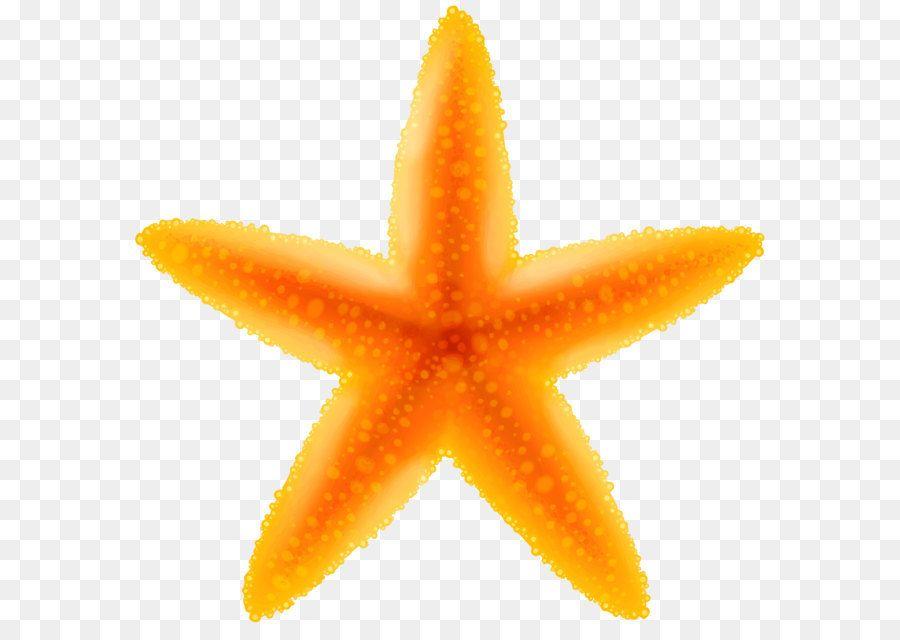 Clip Art Starfish Transparent Png Image Png Is About Is About Marine Invertebrates Starfish Invertebrate Echinoderm Fruit C Fruit Cartoon Clip Art Fruit