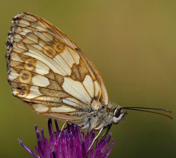 Schmetterlinge Beobachten Natur Entdecken Mit Bildern Schmetterling Falter Tiere