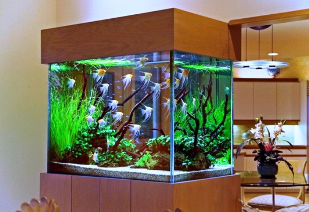 Aquarium fish tank in chennai - Best Aquarium Decorating