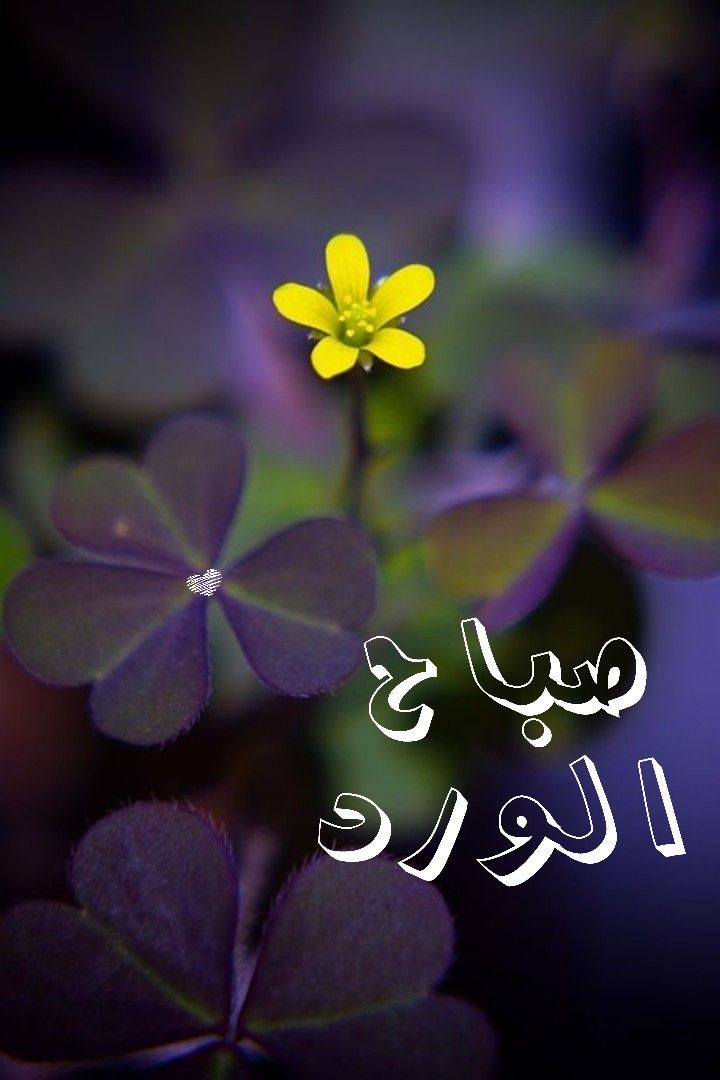 صباح الورد Good Morning Greetings Morning Greeting Morning Wish