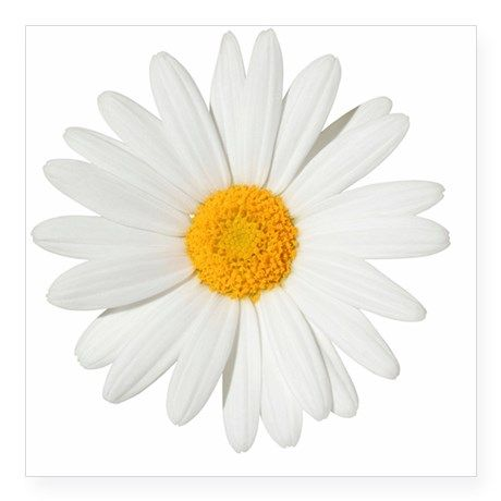 Daisy Square Sticker 3