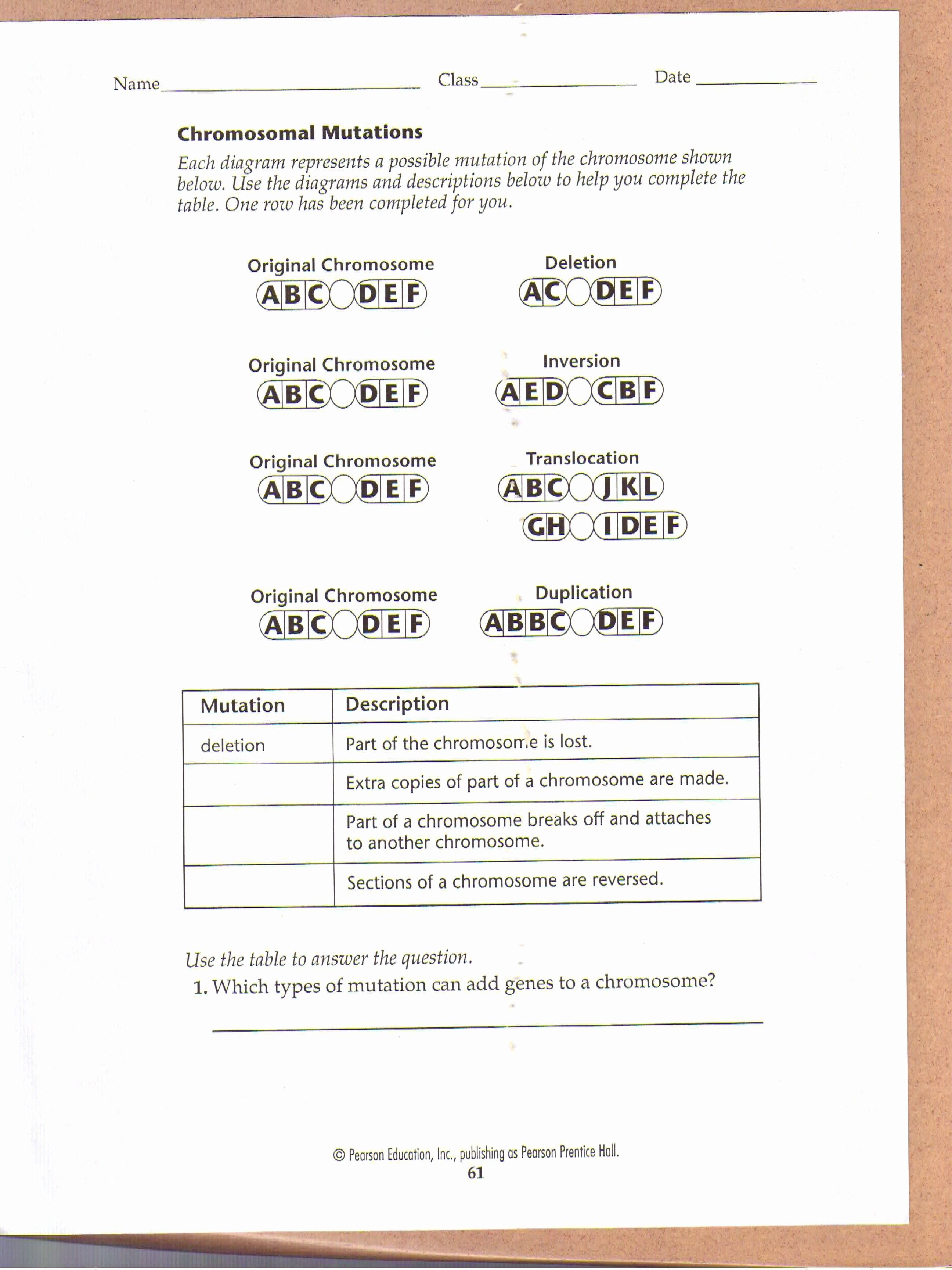 Gene Mutations Worksheet - worksheet