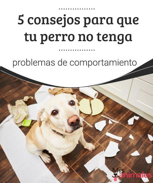 Tipos De Collares De Castigo Para Perros 5 Consejos Para Que Tu Perro No Tenga Problemas De Comportamiento