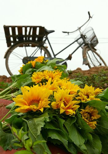 Riderless Bike And Sunflowers Beautiful Flowers Sunflower Happy Flowers