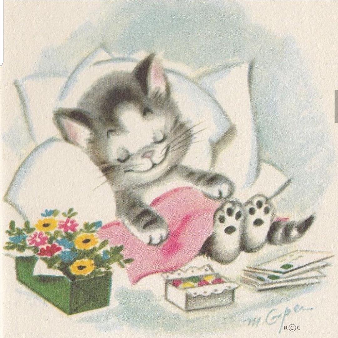Pin By Sandy Jones On Kitters Arts Nighty Night Get Well Soon Cats