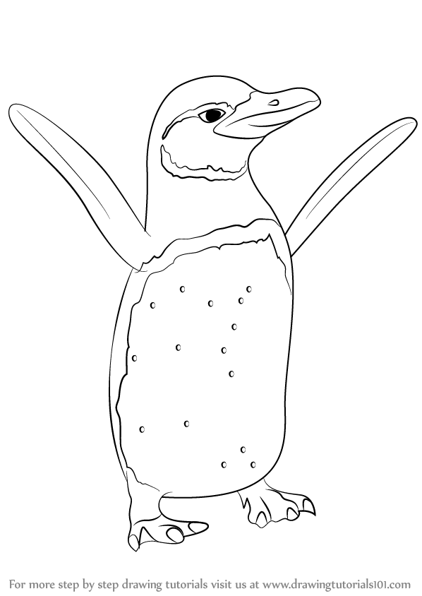 Learn How to Draw a Galapagos Penguin (Antarctic Animals