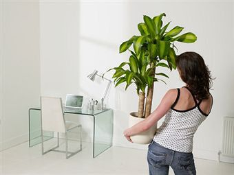 Learn About The Good And Bad Feng Shui Plants Garden More