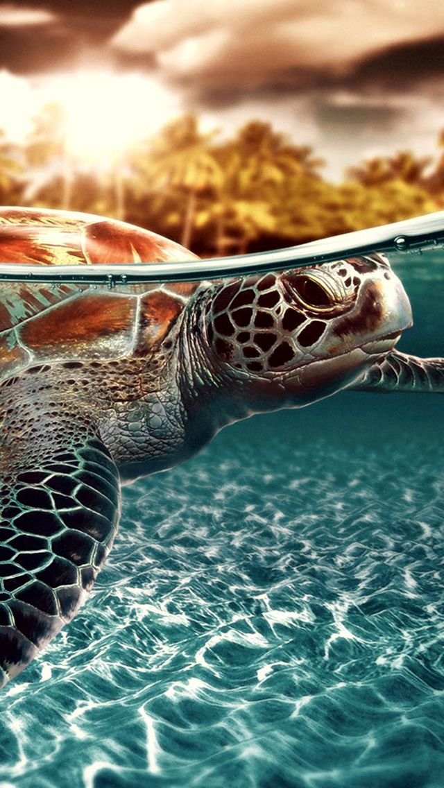 Sea Turtle Wallpaper <3