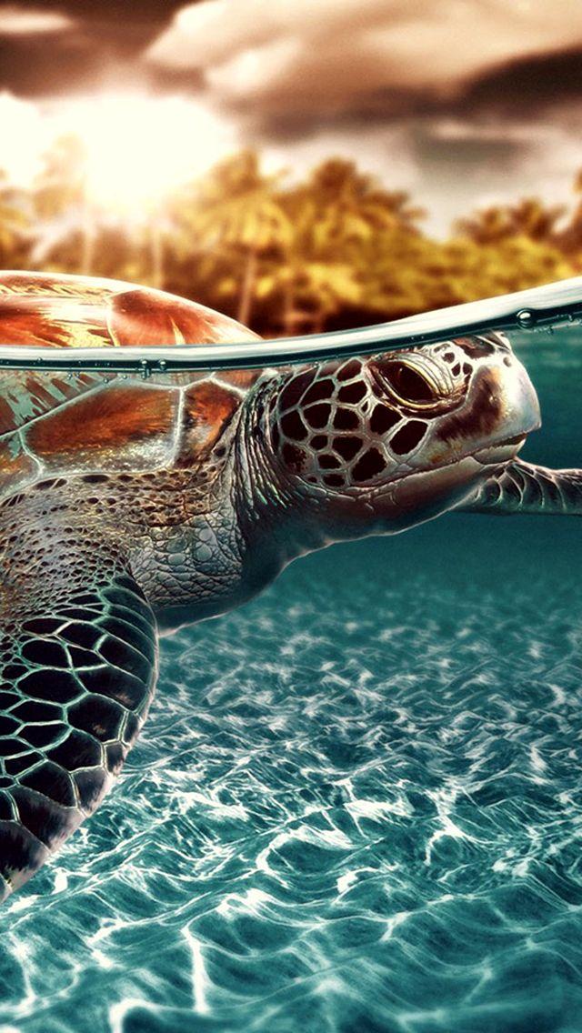 Sea Turtle Iphone 5 Wallpaper 640x1136 Beautiful Sea Creatures Sea Turtle Wallpaper Sea Turtle Pictures