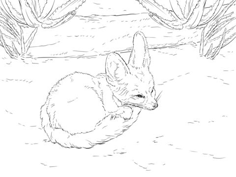 Fennec Fox Curls Up Into A Ball Coloring Page From Fennec