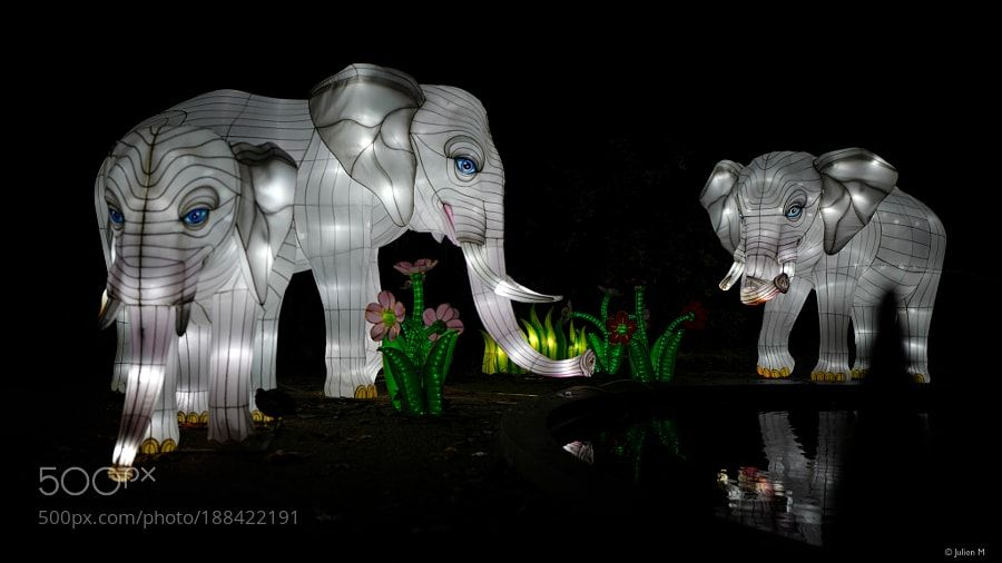 Elephants ( Antwerp Zoo China Light ) by Julien_Meir