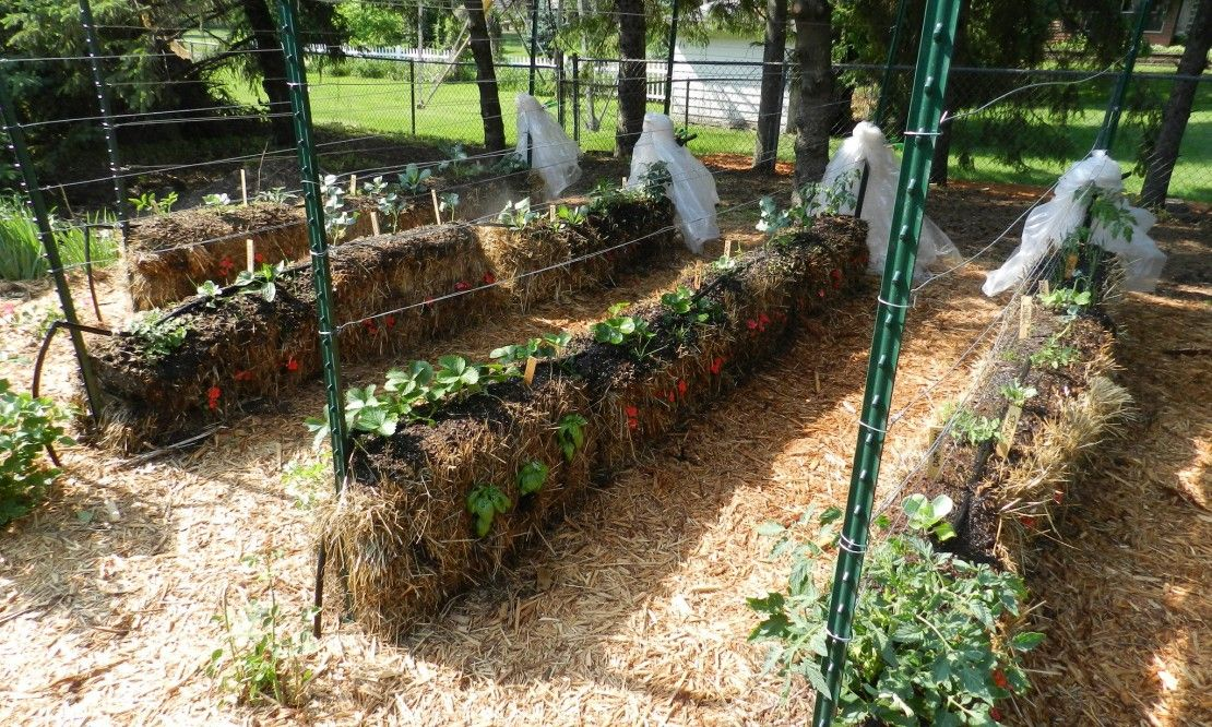 4d4f8c23188d8346d158b8a6d18ff0b9 - Hay Bale Gardening Effortless Food Production