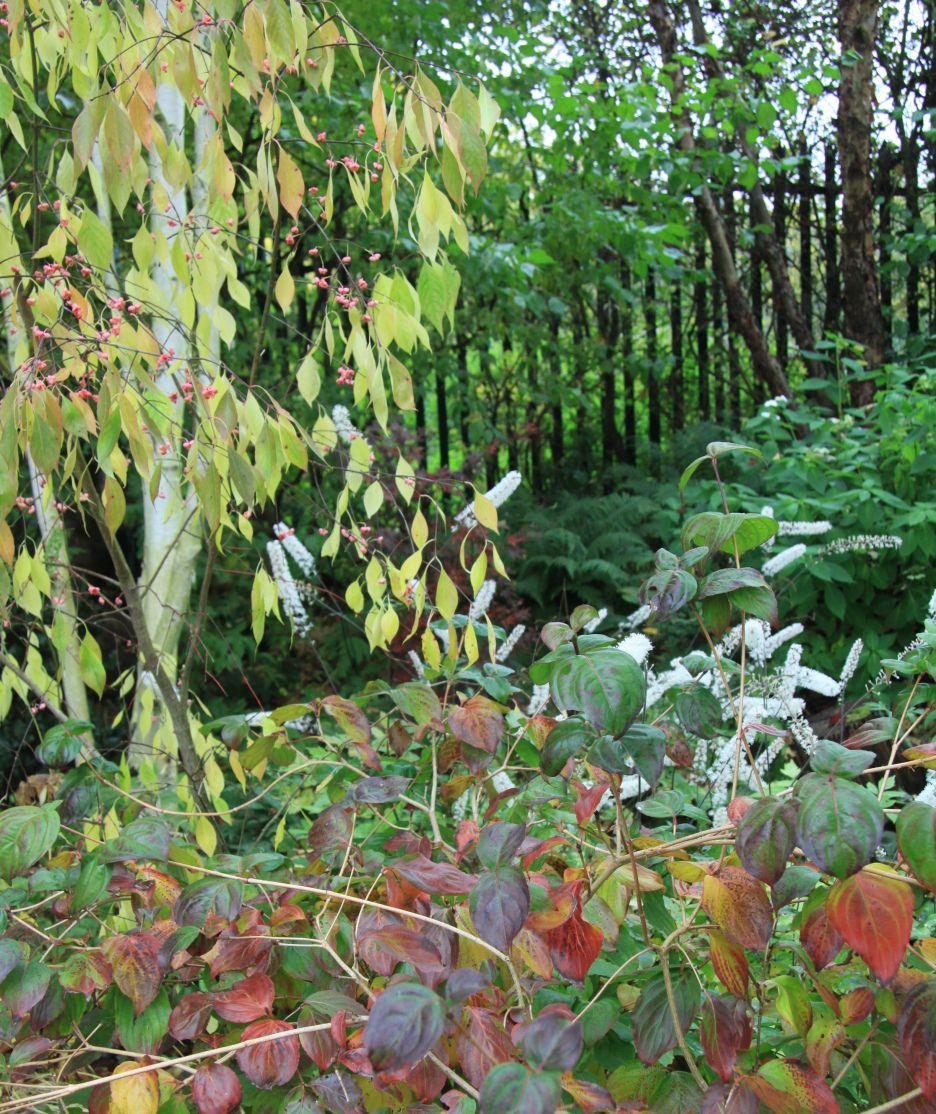 STARRY AUTUMN DAYS | Starry, Foliage
