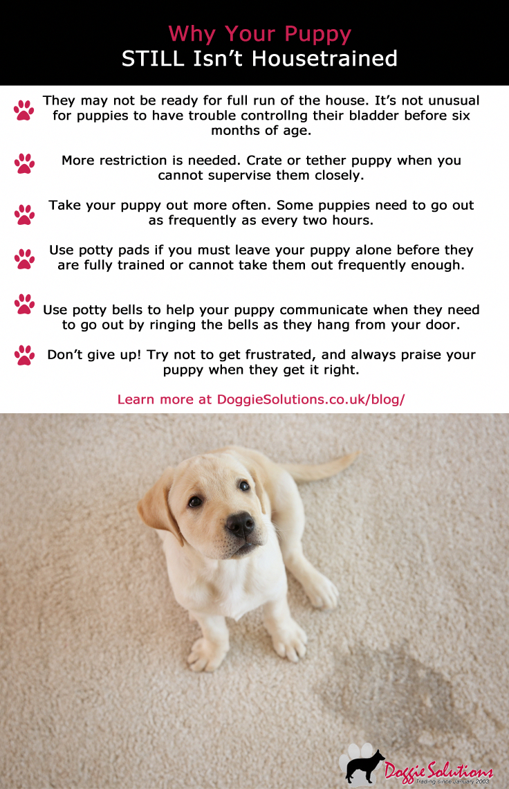 10 Pro Tips For Dog Training By Experts House Training Puppies