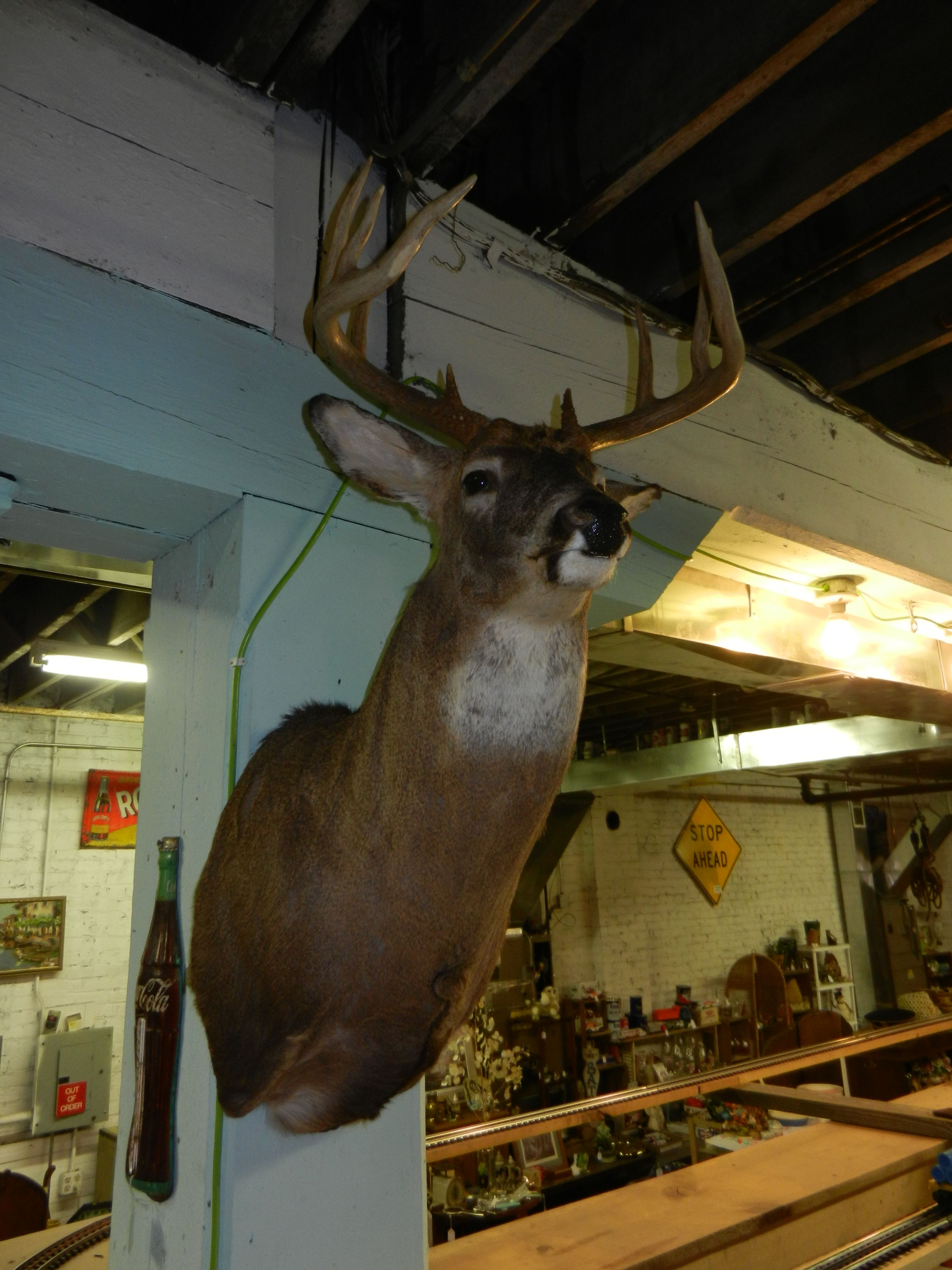 how to clean a deer mount