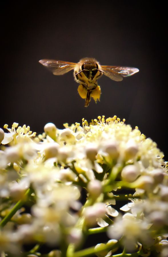 Beecoming by Jamie Condon on 500px