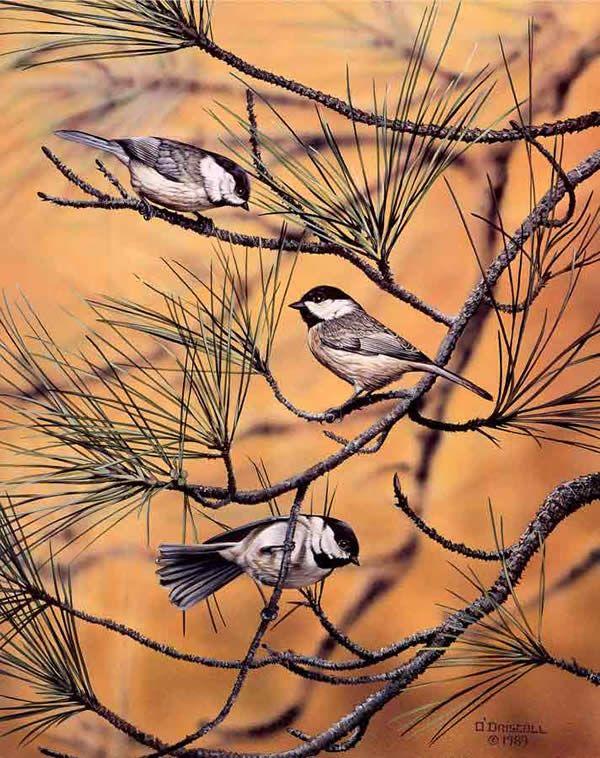 """Autumn Chickadees"" by Danny O'Driscoll, my new favorite bird artist"
