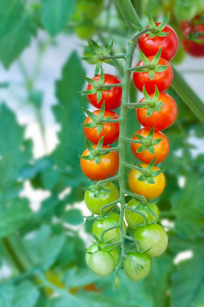 Easy To Grow Fruits Vegetables That Are Impossible Kill
