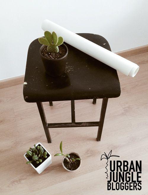 Urban Jungle Bloggers: My Plant Gang by Srta Malasuerte