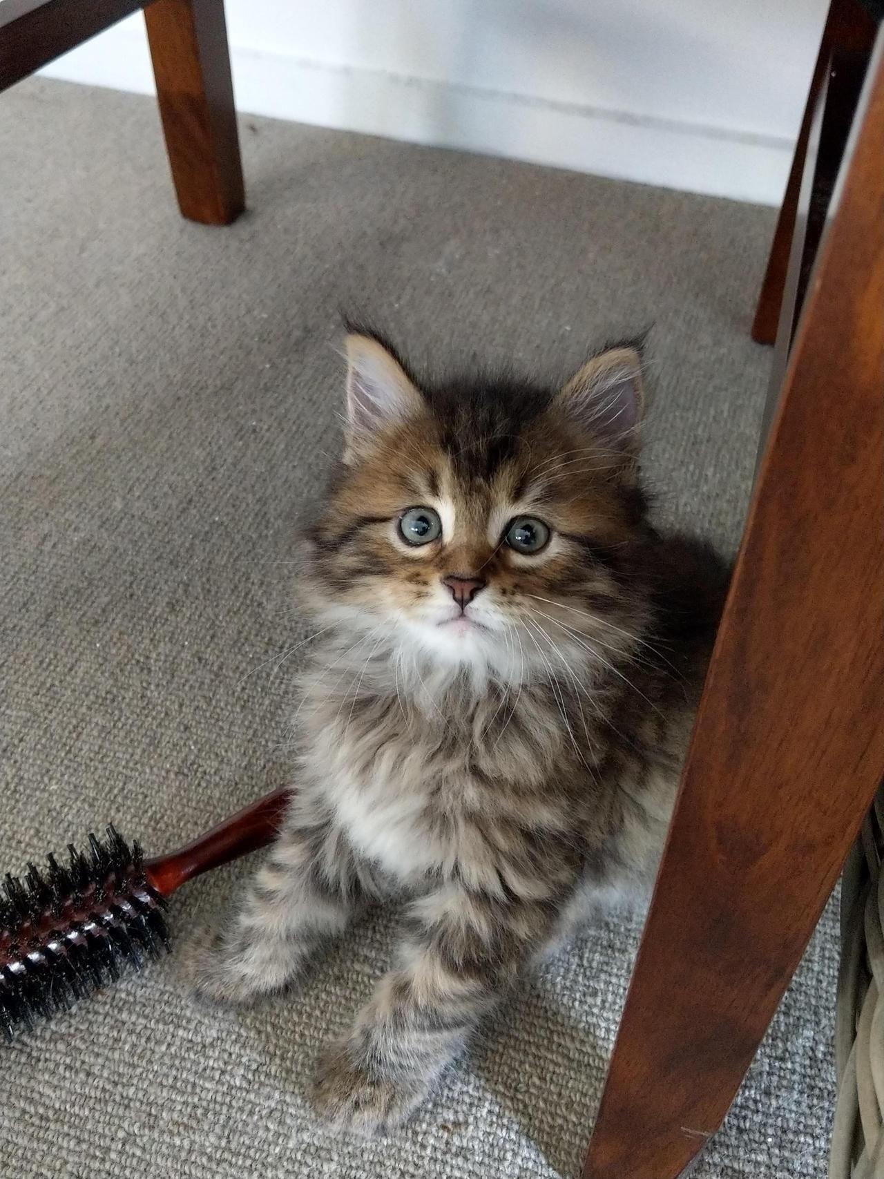 My Kitten Is So Photogenic By Bl64 Cats Kitten Catsonweb Cute
