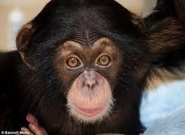 Image result for images of smiling monkeys