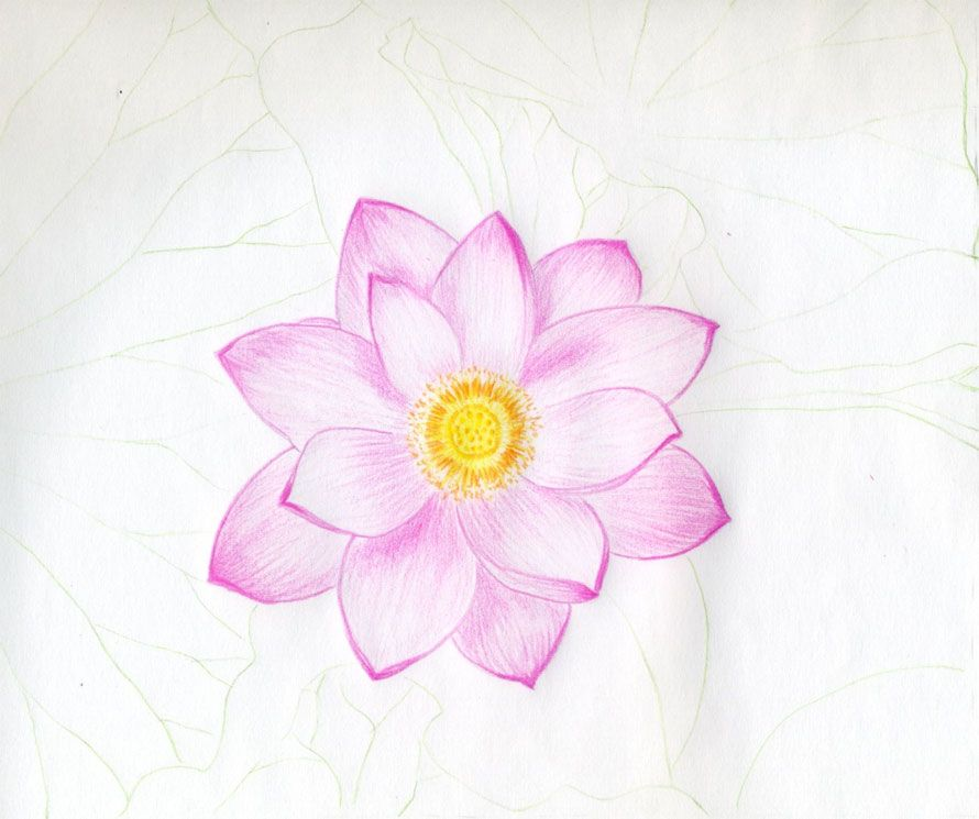 Pin by Rainbow Kitty on Drawings M Lotus flower drawing