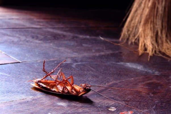 How To Get Rid Of Cockroaches Fast Naturally Kill Cockroaches Home Remedies For Roaches Kill Roaches Roaches