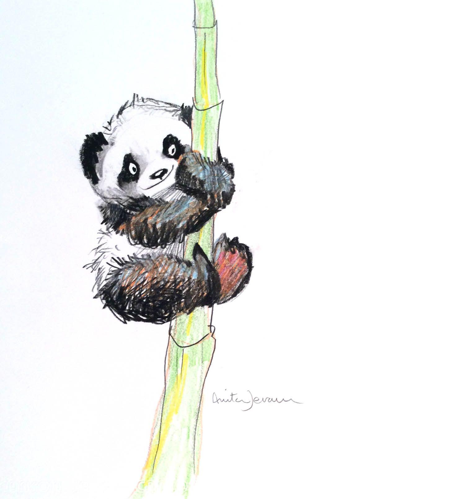 картинки с пандами и бамбуком нарисована выбирайте