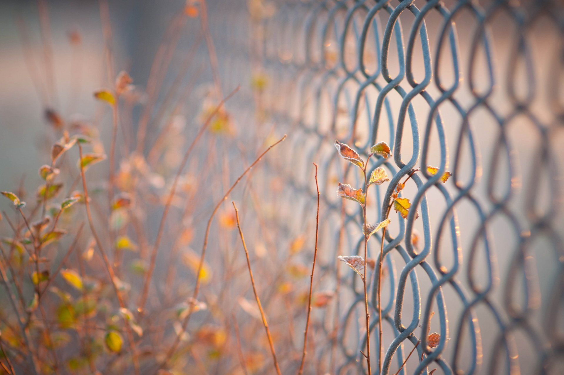 Close Net Gates Fence Fencing Leaves Blur Background Wallpaper Widescreen Full Screen Hd Wallpapers Fullscreen Hd Wallpaper Blur Background Photography Picsart Background Dslr Background Images
