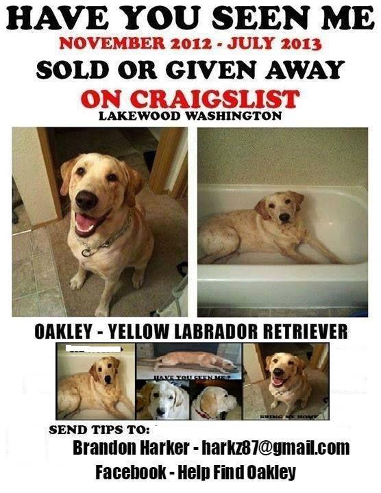 Washington Yellow Labrador Retriever Labrador Retriever Mastiff Mix