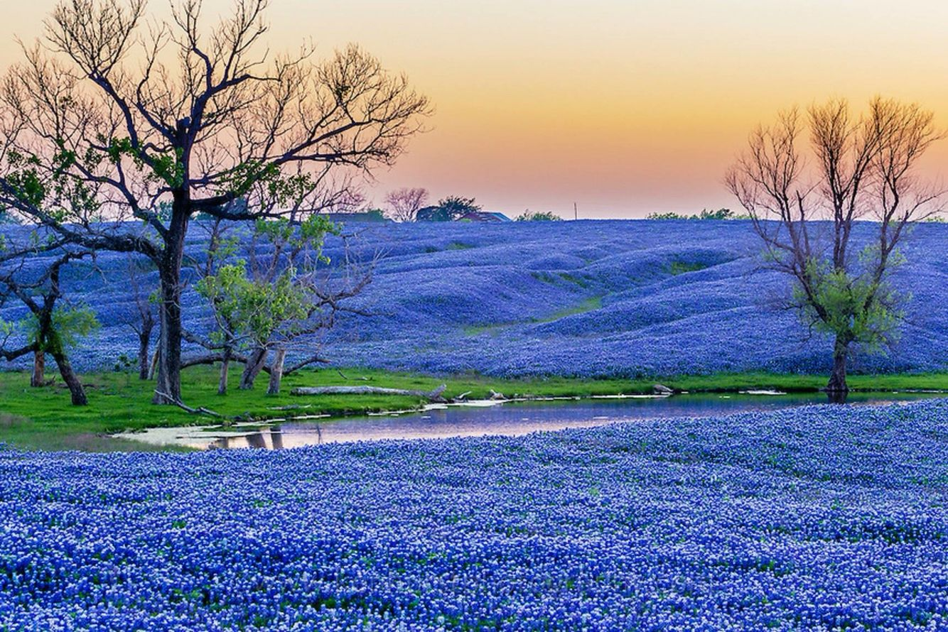 Ennis Texas Bluebonnet Trails Amp Festival April 1st 30th