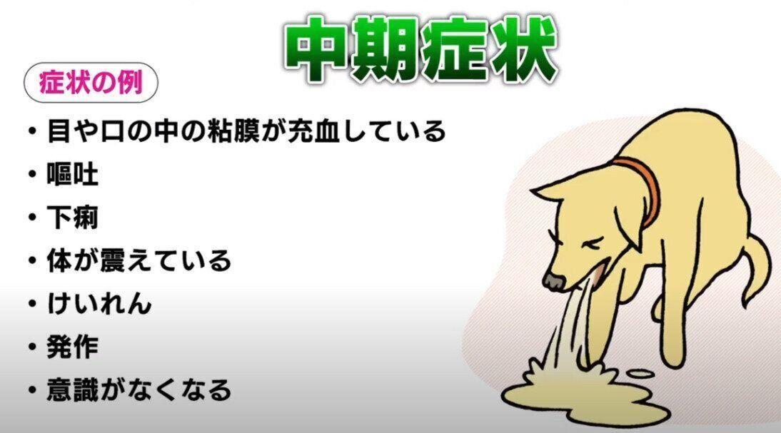 犬の熱中症は一気に進むから要注意 ぐったりする 嘔吐が見られる など症状をチェック いぬのきもちweb Magazine 症状 熱中症 犬