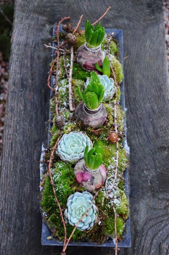 #Dekoration #Hauszwiebeln #Hyazinthen #mit #und Dekoration med hyacinth og husløg        Dekoration mit Hyazinthen- und Hauszwiebeln #frühlingblumen