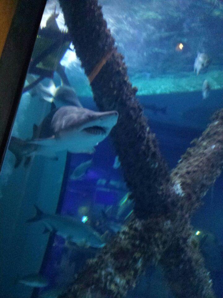 Home shark aquarium pictures new orleans.
