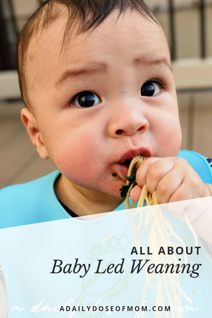 All About Baby Led Weaning | Baby led weaning, Gentle ...