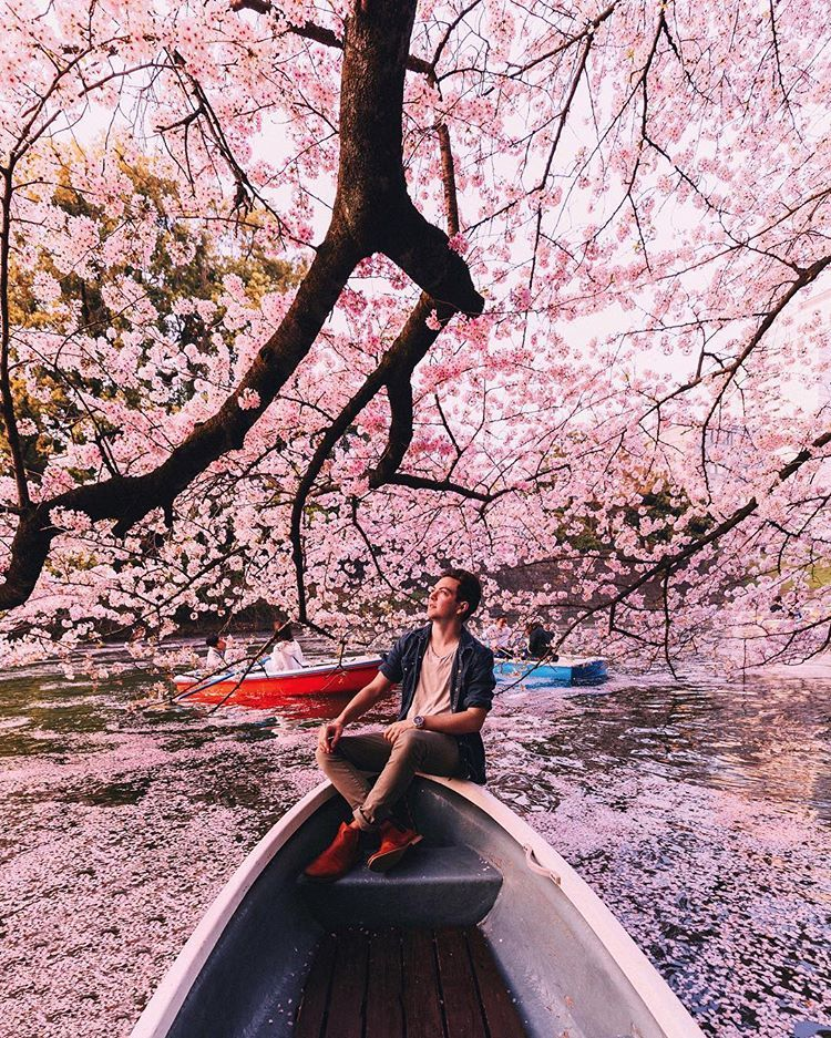 There Are Cherry Blossom Trees Planted Throughout The City We Saw A Lot Especially Near Iconic Landmarks And Japan Outfit Winter Trees To Plant Tourist Sites