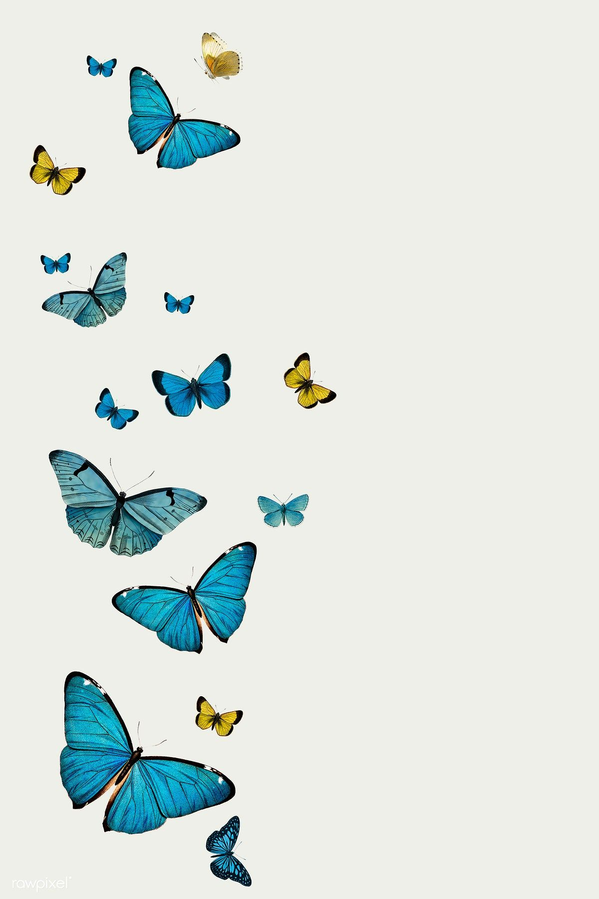 Download premium illustration of Vintage Common Blue butterflies