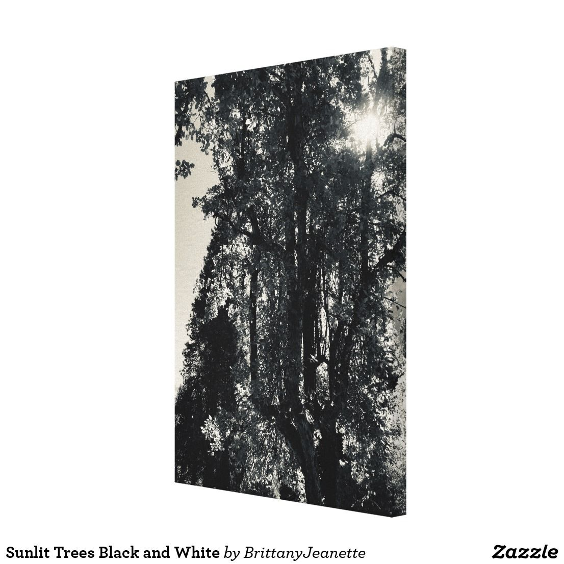 Sunlit Trees Black And White Canvas Print