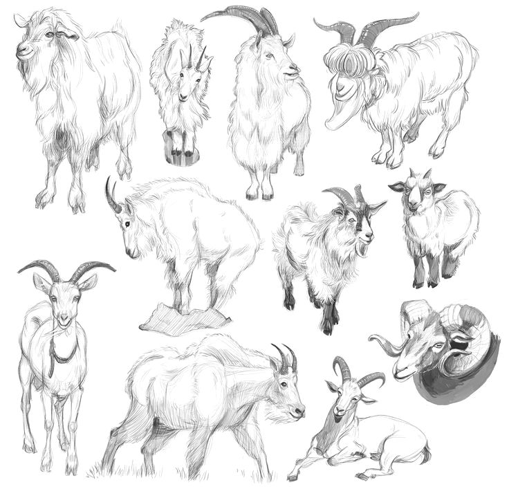 Pin de Christian D Cardenas T en Animales   Pinterest   Anatomía ...