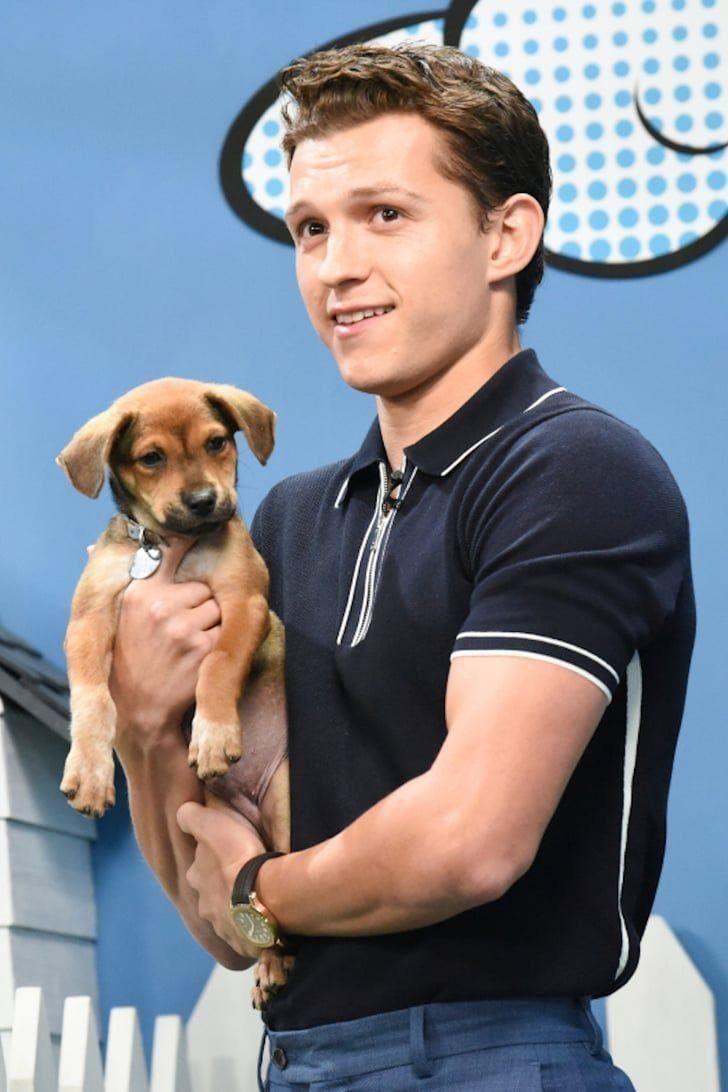 Puppy rescue parker co