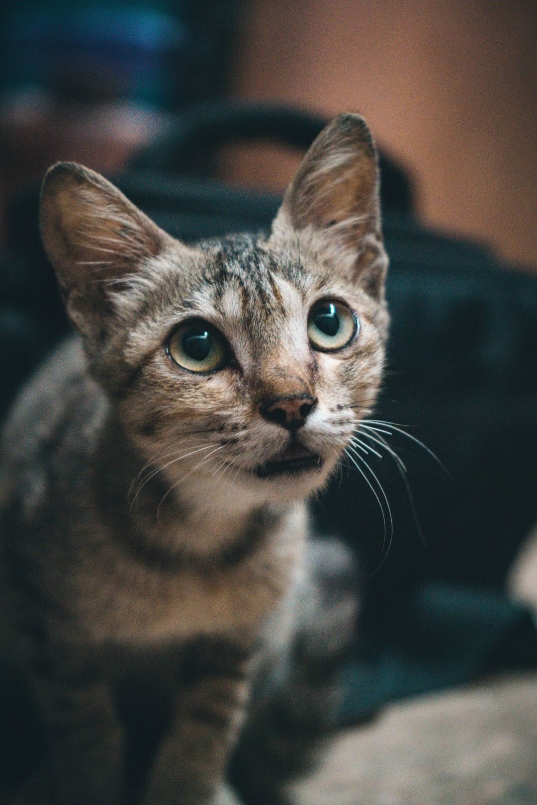 Download This Photo By Vignesh Kumar R B On Unsplash In 2020 Cats Cats And Kittens Kitten Images