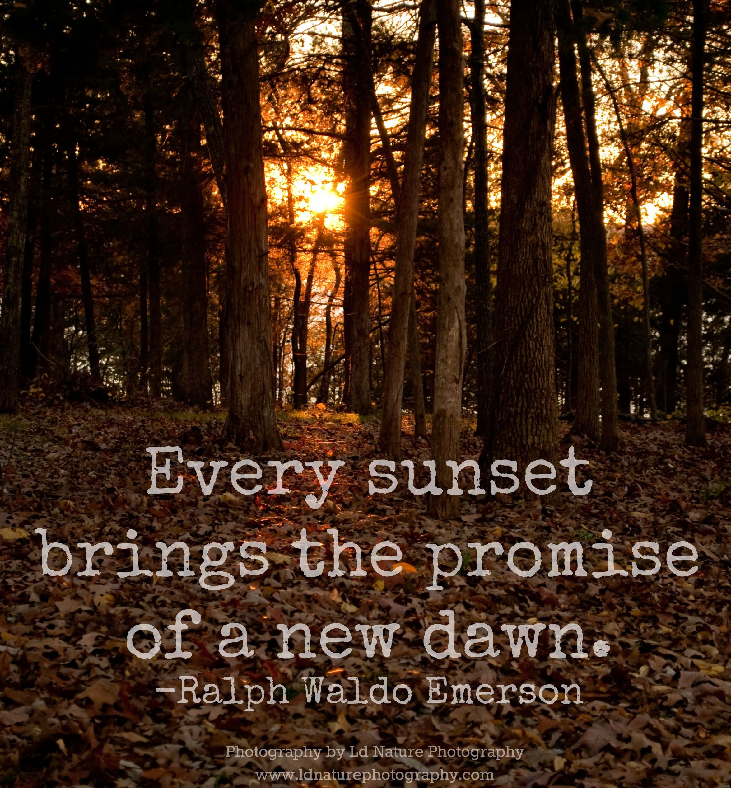 Pin On Nature & Photography Quotes