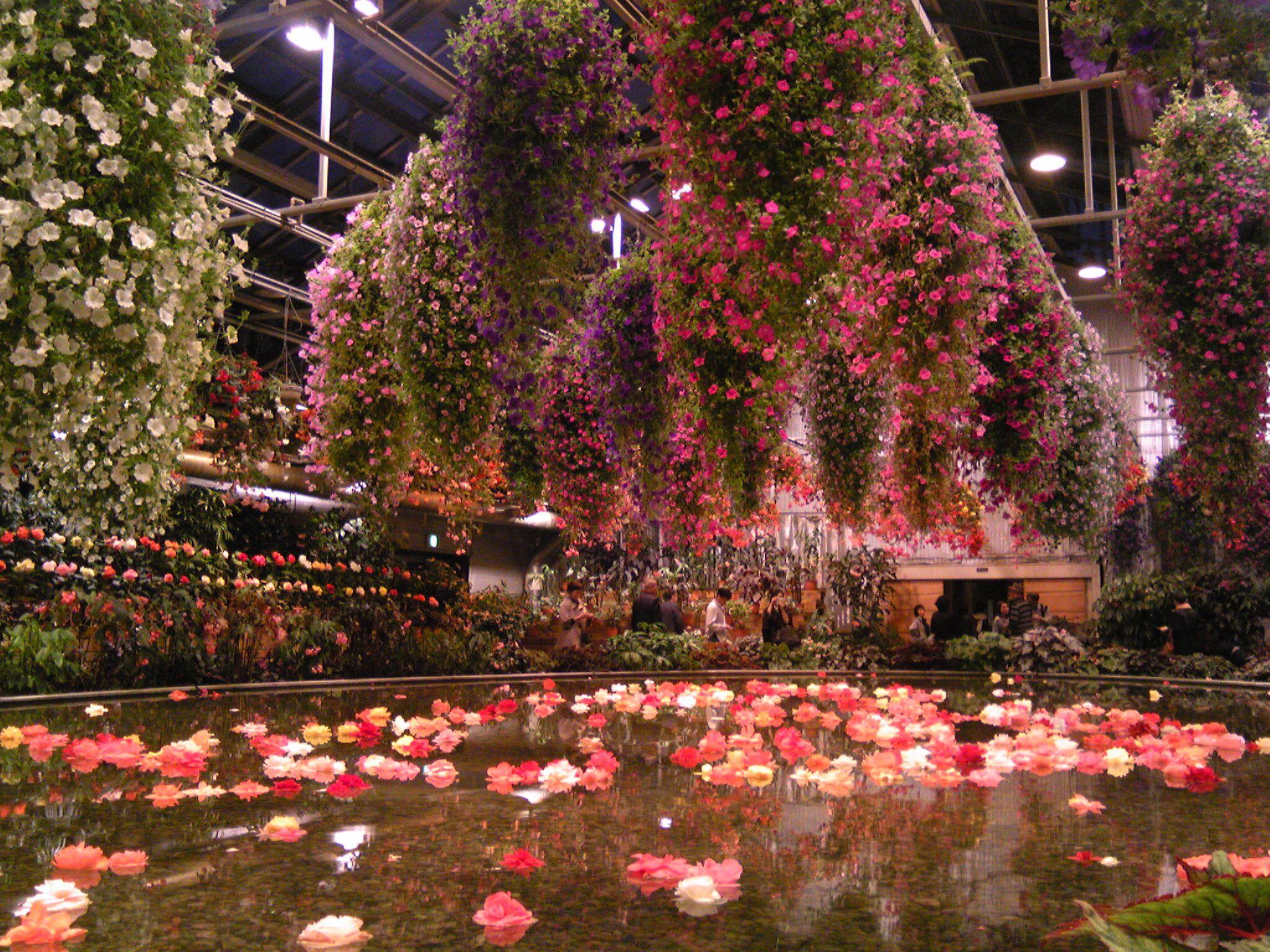 Begonia Garden Nabana No Sato Mie Prefecture Japan Begonia