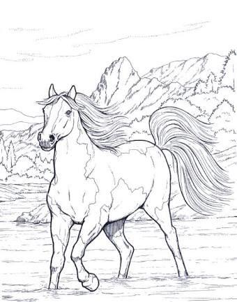 Resultado De Imagem Para Desenhos Cavalos Selvagens Adult