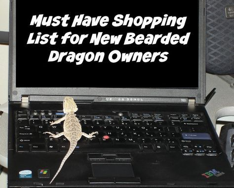 Must Have Shopping List for New Bearded Dragon Owners - #ReptileCare #Sponsored
