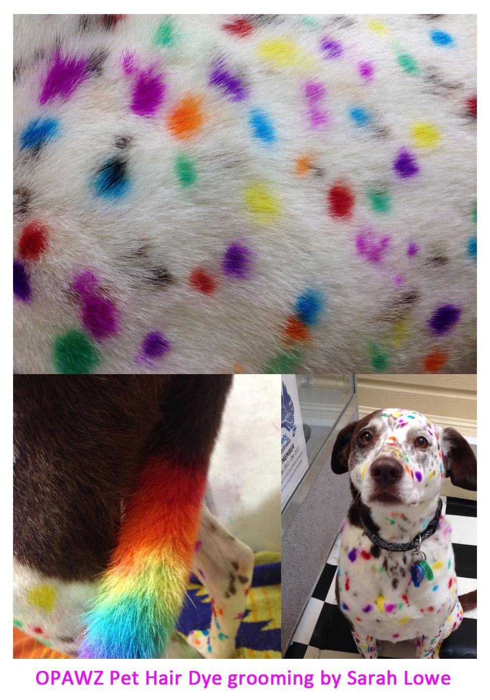 Pet hair dye – temporary color hair dye – dog hair color, dying ...