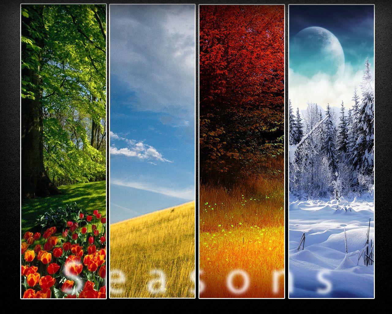Seasons Wallpaper Seasons Seasons Of Life Four Seasons