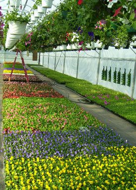 Mcdonald S Greenhouse Places To Go Appalachia Zanesville